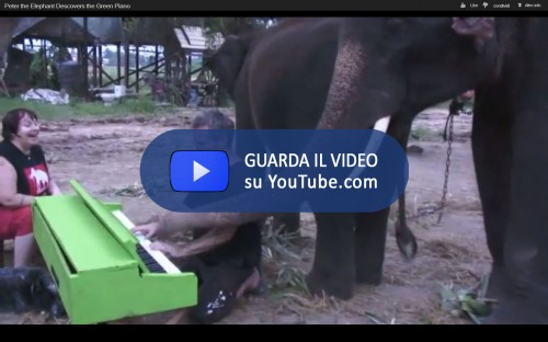 Elefante_Pianista