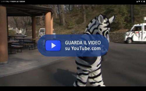 Tama Zoo Zebra
