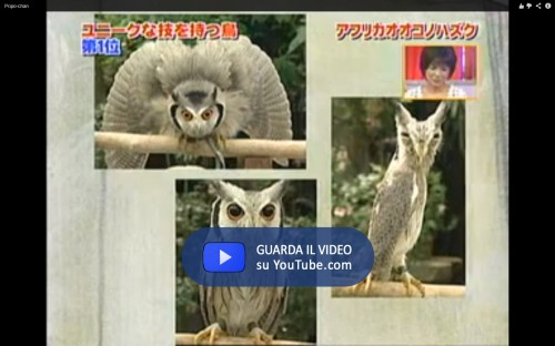 Transforming Owl 2