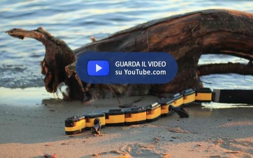 Salamandra Robotica 00