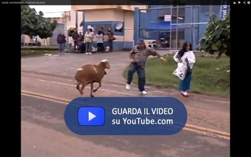 Brazilian Goat