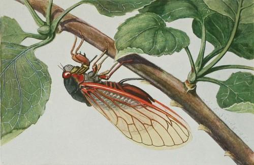 Return of the Cicadas 2