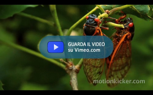 Return of the Cicadas
