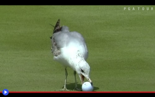 Animals PGA Tour