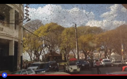 Locuste ad Antananarivo