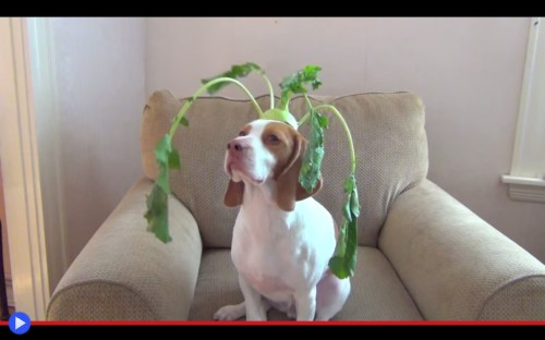 Maymo Vegetables