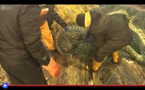 Sea Lion fishermen