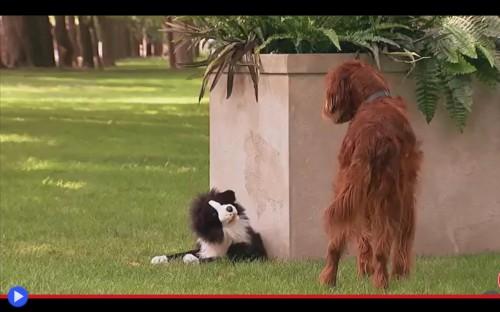 Cani con pupazzo