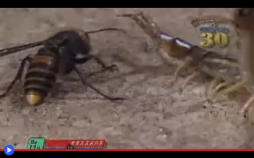 Bug Fights 1