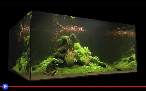 L arte di disporre piante negli acquari il blog di for Fondo per acquario