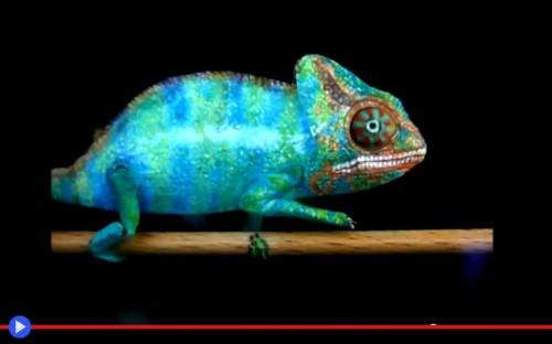 Paper Chameleon