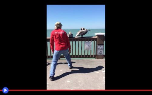 Entangled pelican