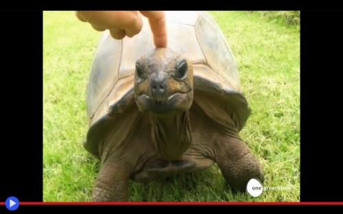 Jonathan la tartaruga