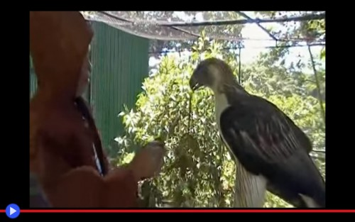 Pagasa Eagle