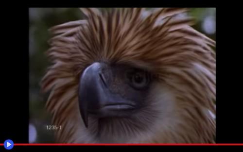 Philippines Eagle 2