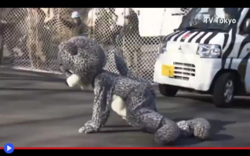 Leopard Escape