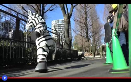 Zebra Escape
