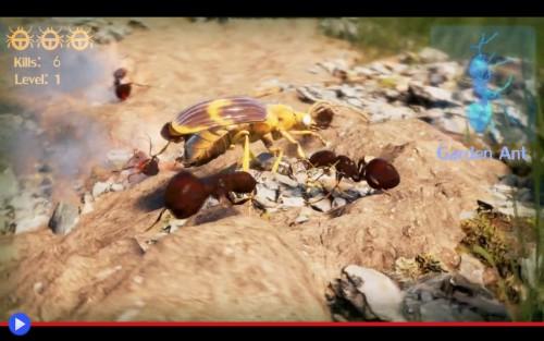 Enthomology Animated Bombardier Beetle