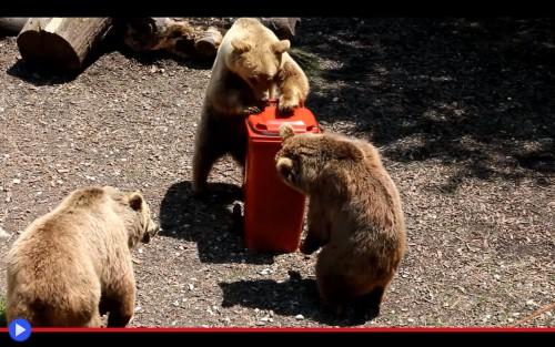 Bear Bin Lubiana