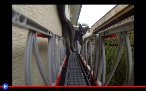 Lego Train Cat