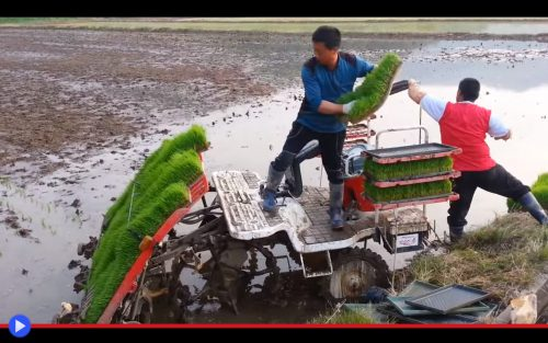 Rice Paddy Machine