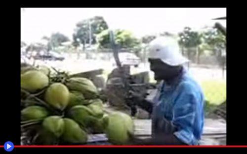 Trinidad Coconut