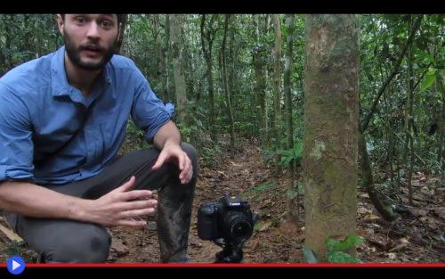 Camera Trap Ants