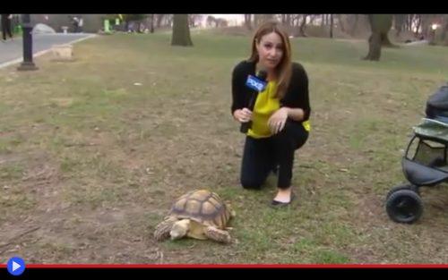 Harlem's Tortoise