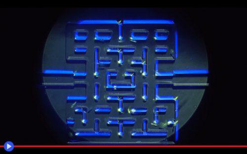Microbe PacMan
