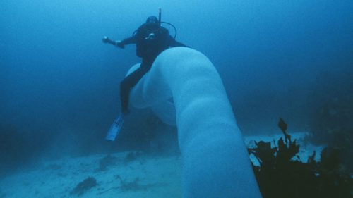 Ride the Pyrosome