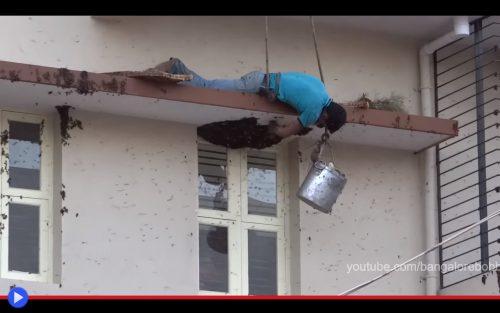 Apis Dorsata Honey Bangalore
