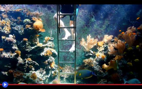 Eli's Aquarium 2