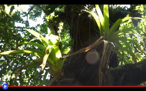 Epiphyte plants