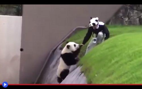 Panda Ditch