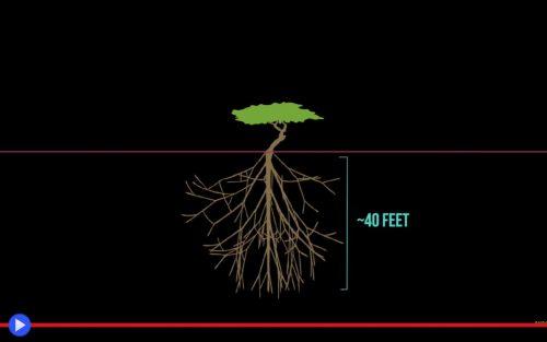 tree-of-tenere