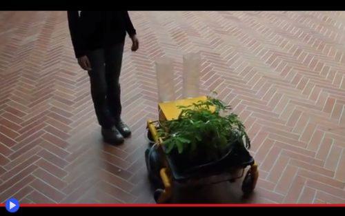 jurema-action-plant