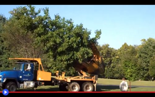 tree-spade