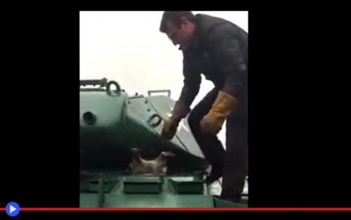 tank-raccoon