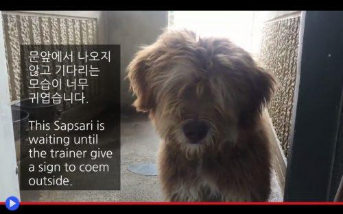 nero in Corea datazione